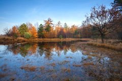 Little lake in autumn forest Royalty Free Stock Images