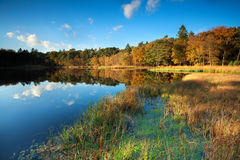 Little lake in autumn forest Stock Image