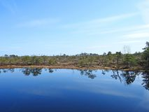 Little lake and beautiful trees in swamp, Lithuania Stock Photography