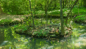 Little lake in the forest with small stone island. On island grow green plants and trees and beauty reflected forest in water Stock Photography
