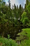 Little Lake in Green Forest. Silesia, Czech Republic (2013 Stock Photo