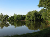 Little lake 2. Green trees and blue sky are reflected in a lake Stock Image