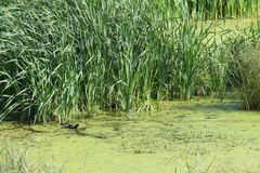 Little lake lakeside Royalty Free Stock Image
