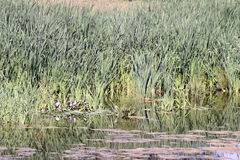 Little lake lakeside Stock Photography