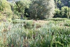 Little lake lakeside Royalty Free Stock Images