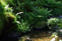 Little lake. Landscape in National Park Czech Switzerland, Czech republic, Europe stock image