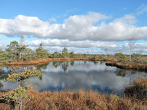 Little lake in moor Royalty Free Stock Photography