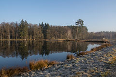 Little lake in the morning Royalty Free Stock Image