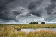 A little lake in National Park De Hoge Veluwe. Stock Image