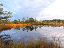 Little lake, plants and beautiful cloudy sky in swamp, Lithuania Royalty Free Stock Photography