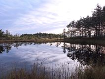 Little lake, plants and beautiful cloudy sky in swamp, Lithuania Stock Images