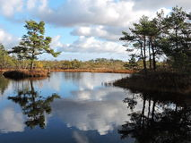 Little lake in swamp Royalty Free Stock Image