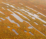 Little lakes on the marsh, top view Stock Photos