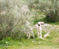 Little lamb. stock images