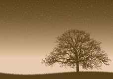 Little Life. Big old tree under the infinity universe Stock Photography