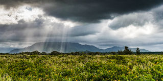 A little light through darkness. A field in Hawaii, a couple rays of sun break through a very dark cloud Royalty Free Stock Images