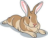 A little likable brown rabbit l Stock Images