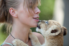 Little lion cub biting girl playing Stock Image