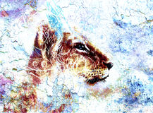 Little lion cub head. animal painting, abstract Royalty Free Stock Photography
