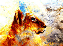 Little lion cub head. animal painting on vintage Stock Images