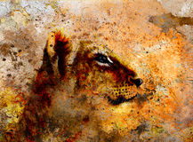 Little lion cub head. animal painting on vintage. Paper, abstract color background with spots and crackle Stock Image