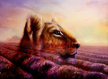 Little lion cub head on purple lavender fields. Animal painting and violet flowers on sunset Stock Photo