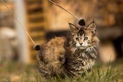 Little lion stock photo