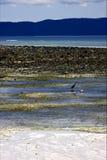 Little little bird beach   in indian ocean madagascar Royalty Free Stock Photography
