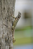 Little lizard. Rests on a tree trunk Stock Image