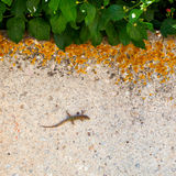 Little lizard on sand Stock Photos