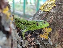 Dragon on tree royalty free stock photos