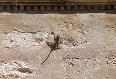 Little lizard on a wall royalty free stock photo