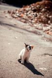 Little lonely kitten. This kitten is lonely in the middle of the road, hoping that is about, and there are the new owners Royalty Free Stock Photo