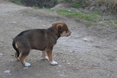 A little lonely puppy in Roupite. This photo was taken in South West Bulgaria in November - Kojuh, Roupite stock photos