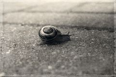 A  little lonely snail walking on a gray old sidewalk Royalty Free Stock Image