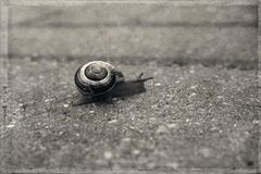 A  little lonely snail walking on a gray old sidewalk Royalty Free Stock Images