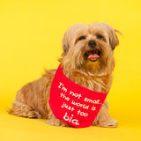 Little long haired dog on yellow background Royalty Free Stock Photography