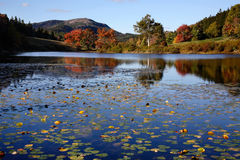 Little Long Pond royalty free stock photos