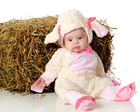 Little Lost Lamb Stock Photo