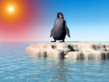 Little Lost Penguin 10 Royalty Free Stock Image