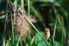 Little lovely bird Stock Photography