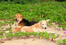 Little lovely two dog wait to play Stock Images