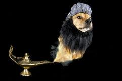 Little magic pet Stock Photos