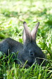 Little mammal rabbit Stock Image