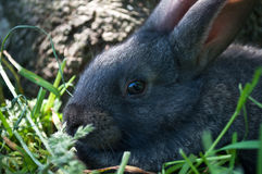 Little mammal rabbit on a grass Royalty Free Stock Photography