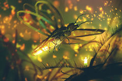 Little man directing giant firefly in a night forest. Illustration painting Stock Images