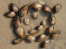 The little man of molluscs. The little man of  of clam shell on the sand at water edge Stock Photography