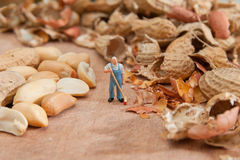 The little man sweeps shell peanuts. The concept of work, keepin Stock Photos