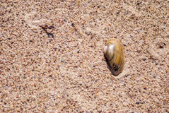 Little marine shell on sand... Stock Photo