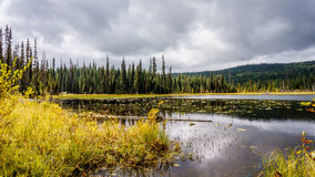 Little McGillivray Lake Royalty Free Stock Image